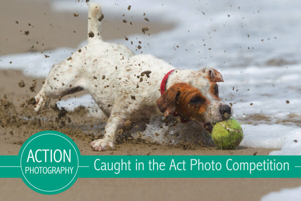 Caught in the Act [Action] Photo Competition