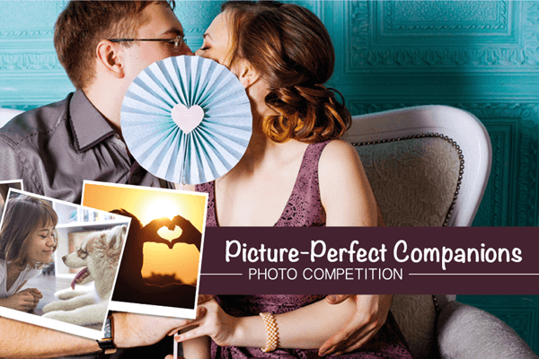 Picture Perfect Companions Photo Competition
