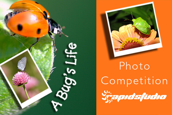 A Bug's Life Photo Competition